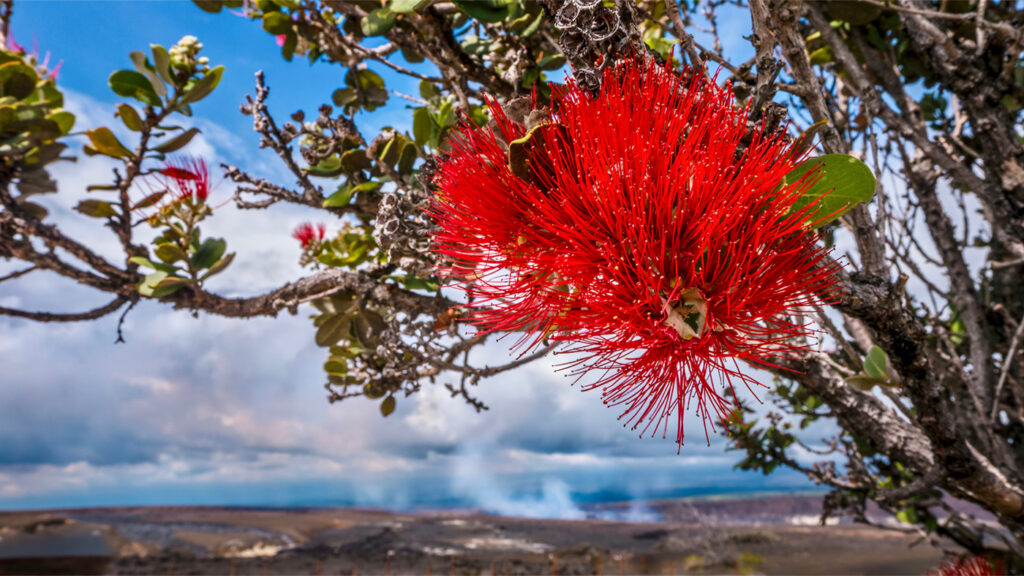 travel-ideas-hawaii-official-color-flower